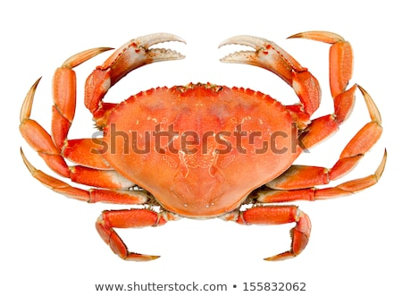 Cooked Crab At Market Stock photo © searagen