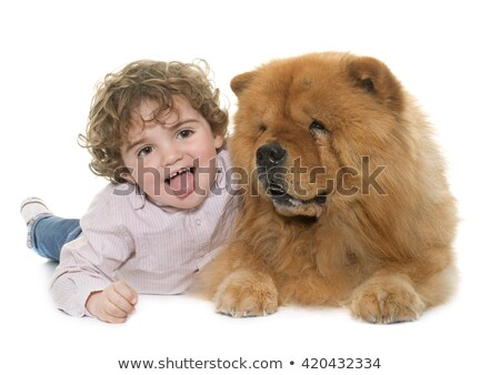 chow chow dog and little boy Stock photo © cynoclub
