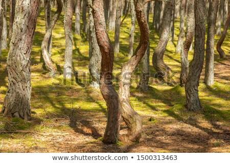 Tánc erdő emberek szeretet fehér Stock fotó © compuinfoto
