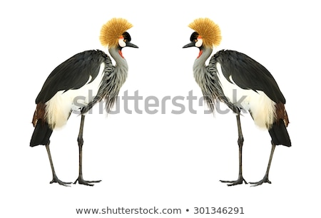 African Crowned Crane Stock photo © 5xinc