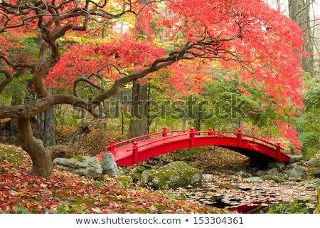 red bridge in japanese garden stock photo © compuinfoto
