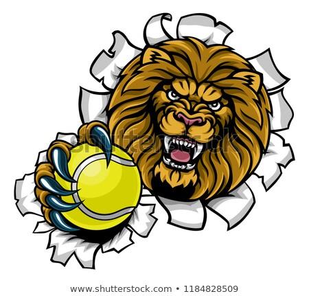Stock fotó: Lion Holding Tennis Ball Breaking Background