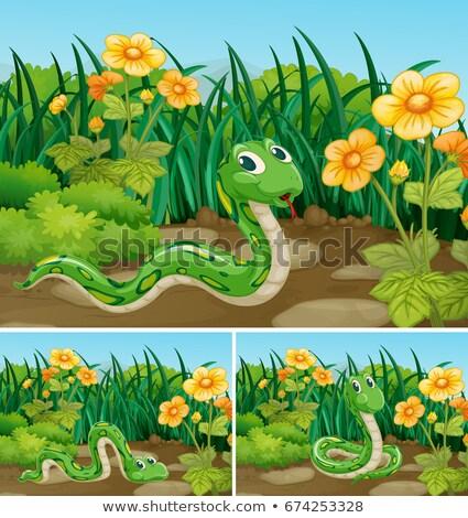 Três verde serpente jardim ilustração flores Foto stock © colematt