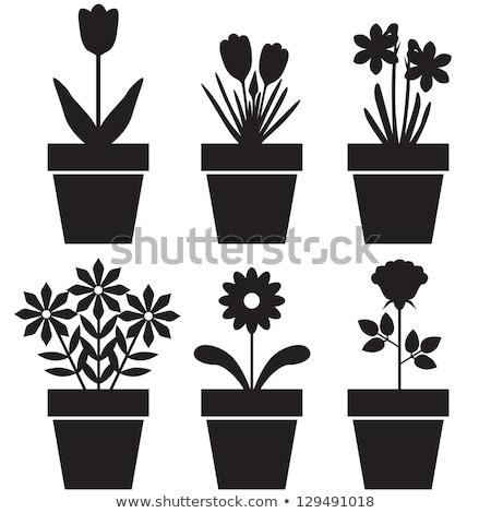 black  illustration of potted flowers Stock photo © Olena