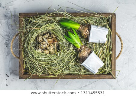 Photo stock: Quail Eggs On The Hay In Wooden Box Light Gray Concrete Table
