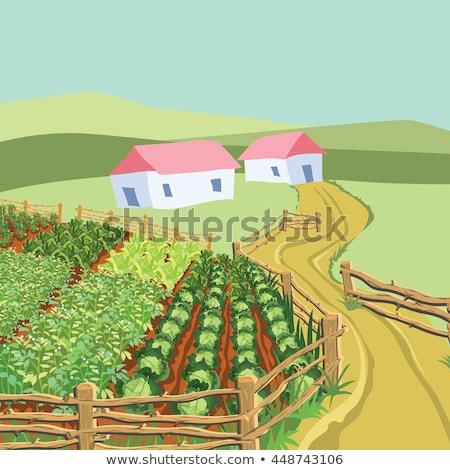Granja escena vegetales jardín granero ilustración Foto stock © colematt