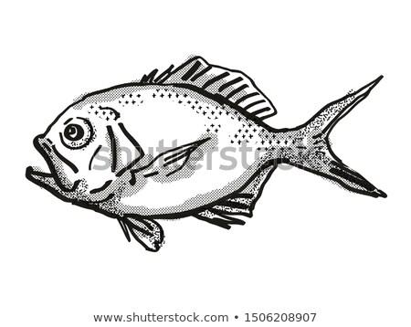 Yelloweye Redfish Australian Fish Cartoon Retro Drawing Stock photo © patrimonio