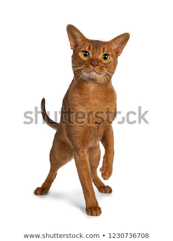 Guapo excelente jóvenes masculina gato pie Foto stock © CatchyImages