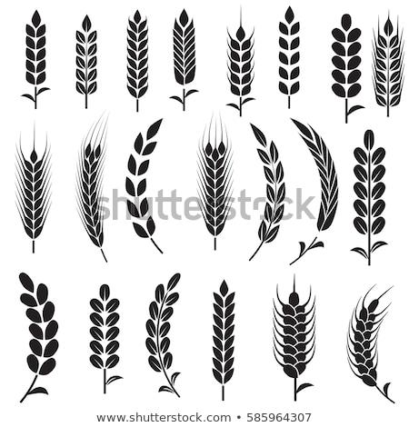 Tarwe oor symbool voedsel Stockfoto © nomadsoul1