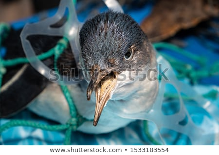 Animals And Pollution Stock photo © Lightsource