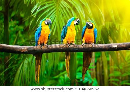 Papegaaien stand zomer dag bos Stockfoto © bloodua