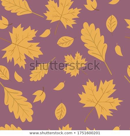 abstract · natura · autunno · simbolo · design · frame - foto d'archivio © orson
