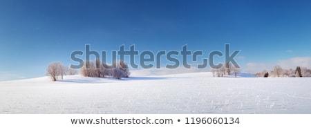 Tél mező napos fagyos nap kék ég Stock fotó © artush