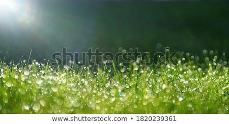 Stok fotoğraf: ıslak · çim · su · seçici · odak · doğa · yaprak