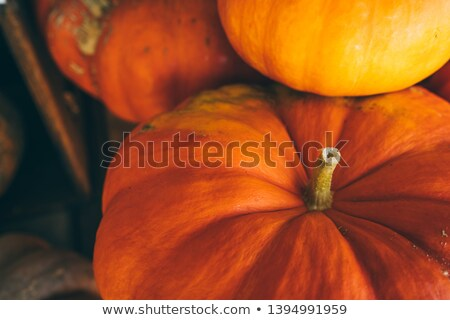 Lot of Pumpkins Stock photo © tepic