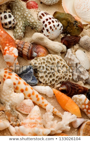 Conch Shells and Corals Pieces Stock photo © zhekos