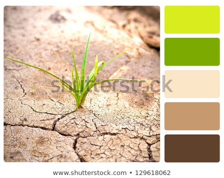 Green plant, cracked earth colour palette swatch Stock photo © REDPIXEL