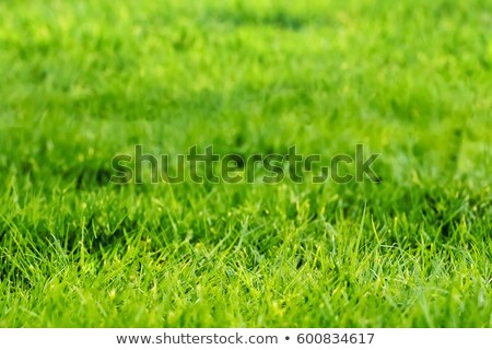 chopped lawn green grass Stock photo © vavlt