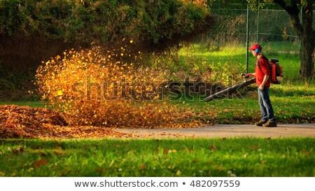 лист воздуходувка человека работу саду Сток-фото © Tawng