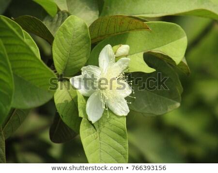 Coleção secar pequeno semente Foto stock © ziprashantzi