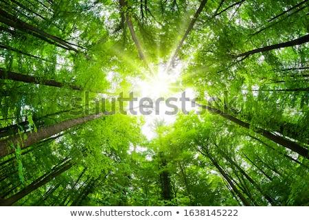 Magnífico árvore colina floresta paisagem silhueta Foto stock © mariephoto
