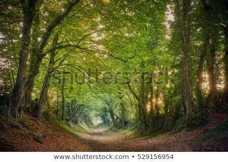 полоса зеленый деревья большой саду Сток-фото © compuinfoto