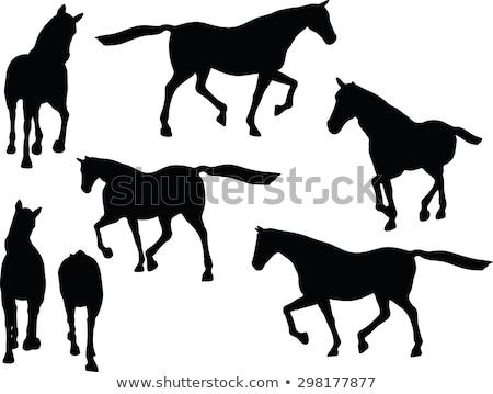 лошади силуэта создают вектора изображение изолированный Сток-фото © Istanbul2009