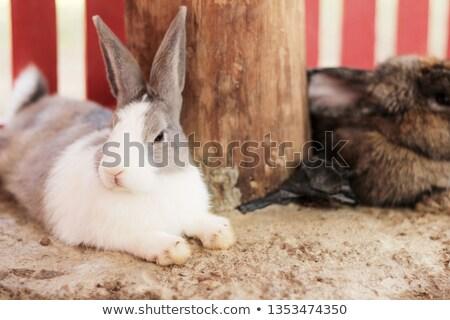 Nyúl alszik padló otthon nappali nyuszi Stock fotó © wavebreak_media