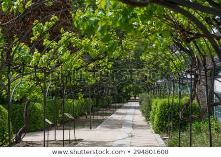 Invernadero real Madrid fuente real botánico Foto stock © backyardproductions