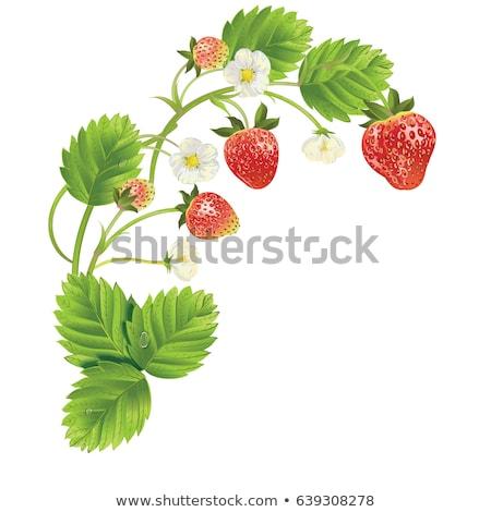 Wild Strawberry Blossom Stock photo © brm1949