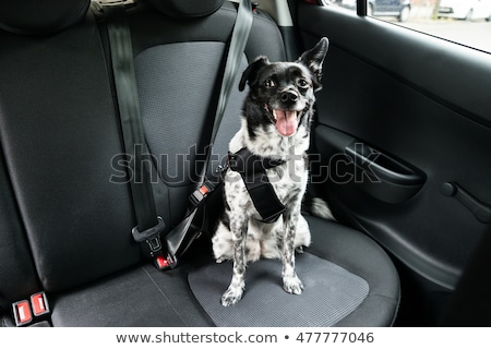 dog sitting in a car stock photo © andreypopov