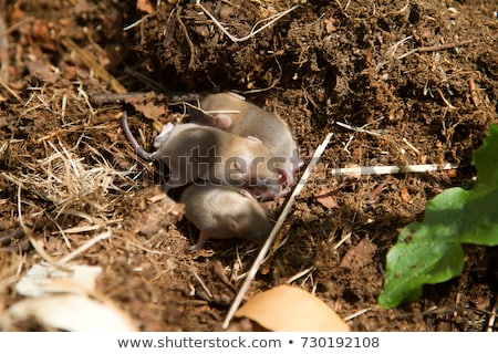 Stok fotoğraf: Küçük · gıda · yılan · diğer · hayvanlar