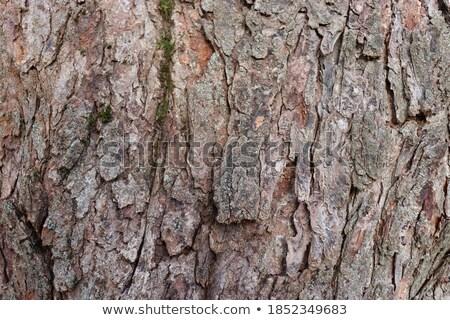 Kory starych drzewo wyblakły tekstury streszczenie Zdjęcia stock © manfredxy