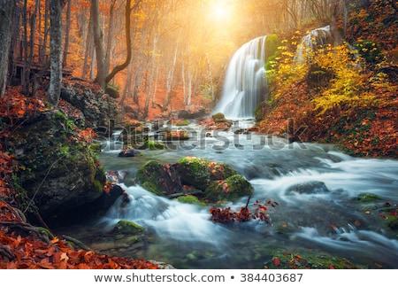Scena cascata boschi illustrazione acqua foresta Foto d'archivio © bluering