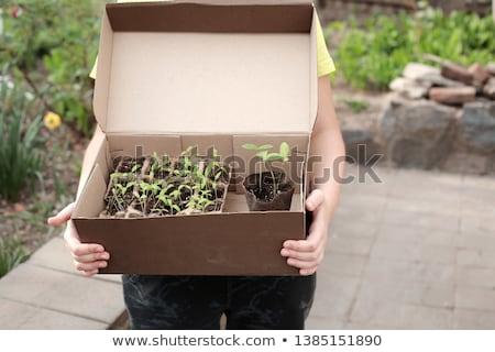 agricultor · cuadro · frescos · verde · plántulas · pepino - foto stock © Virgin