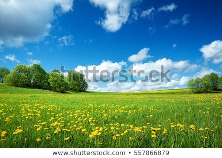 Gyönyörű virágok dombok tájkép illusztráció virág Stock fotó © bluering