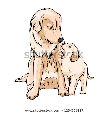 Golden Retriever Puppy Stock Vectors Illustrations And Cliparts