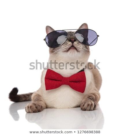 Foto stock: Elegante · gato · gafas · de · sol · gris