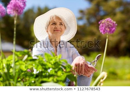 virág · virágzik · makró · tavasz · háttér · nyár - stock fotó © dolgachov