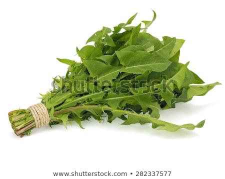 Pissenlit feuille blanche printemps herbe Photo stock © bdspn