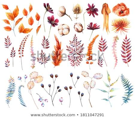 Gedroogd vallen bloemen boeket bloem Stockfoto © neirfy