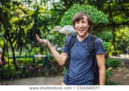 Young man feeding ibes in the park. Little Egret Cattle egret Bubulcus ibis Waters Edge Stock photo © galitskaya