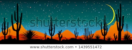 Starry night over the Mexican desert Stock photo © liolle