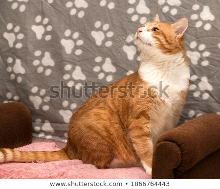 Cute ginger kitten with pleading eyes - close up portrait Stock photo © ilona75