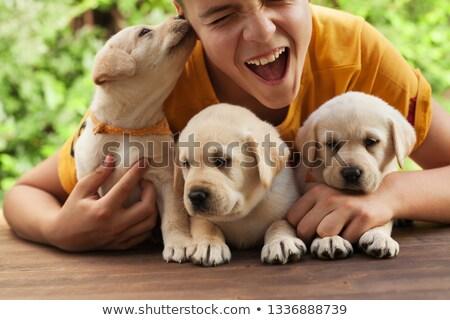 子犬 · 幸せ · ペット · 子 - ストックフォト © ilona75