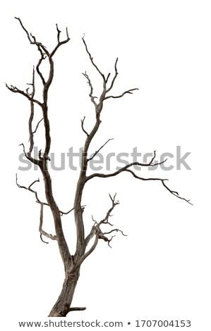 Toter Baum getragen grau Hintergrund schwarz tot Stock foto © pancaketom