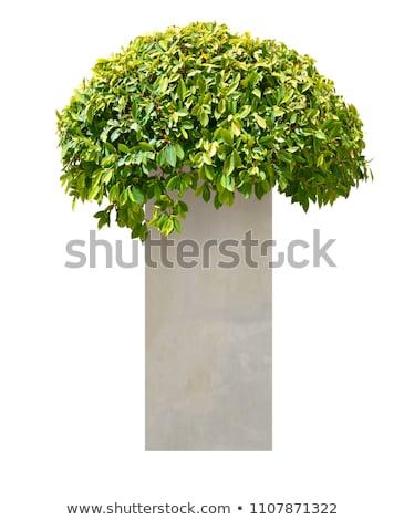 Decorative vase and trimmed bushes, Stock photo © ruslanshramko