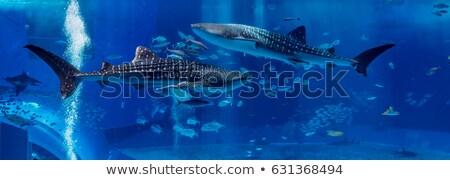 aquarium with whale shark in Okinawa Stock photo © leungchopan