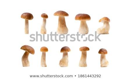 ヤマドリタケ属の食菌 · 秋 · 森林 · 雨 · 値下がり · 食品 - ストックフォト © zhekos