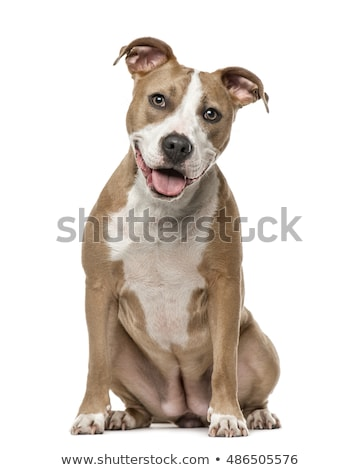 puppy · hond · witte · huisdier · sterke - stockfoto © capturelight